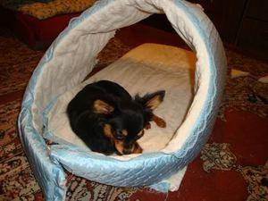 Будиночок для маленької собаки