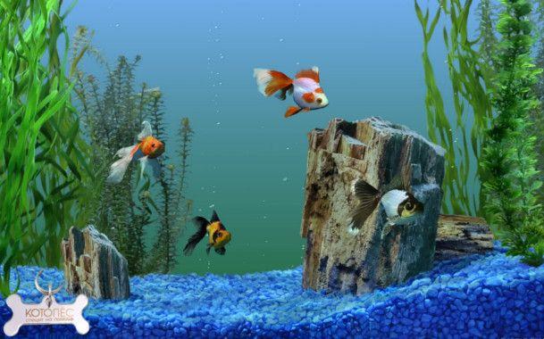Різновиди акваріумних рибок з назвами: екзотична краса