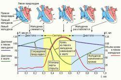 скорочення серця