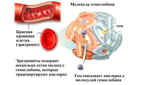 Гемоглобін: яку норму у чоловіків