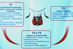 Діагностика захворювань щитовидної залози