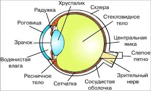 Що таке зоровий аналізатор і схема його побудови