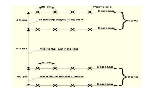 Схема посадки насіння огірків